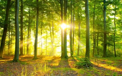 Comparación de diferentes manejos forestales