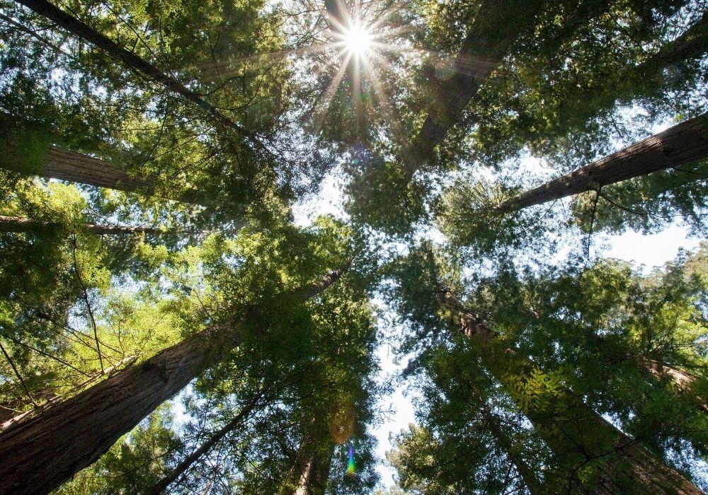 Costo de producción forestal