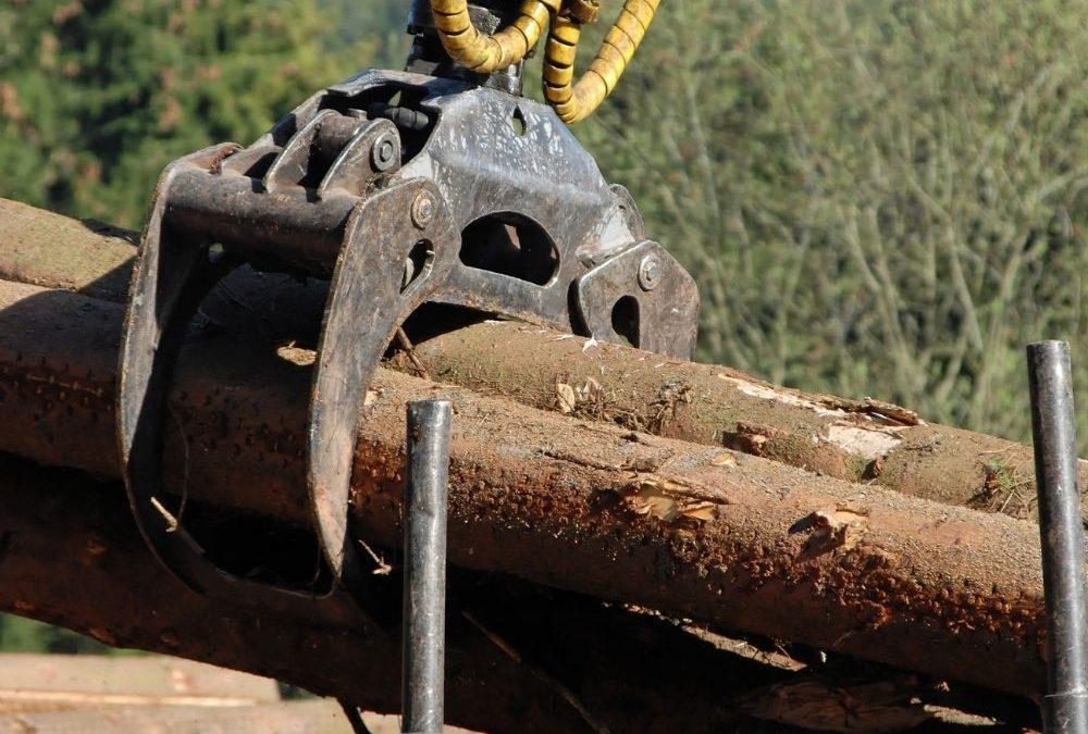 Gestión de empresas forestales