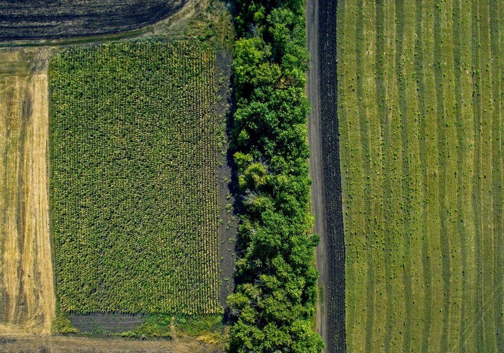 Manual para la medición de plantaciones forestales