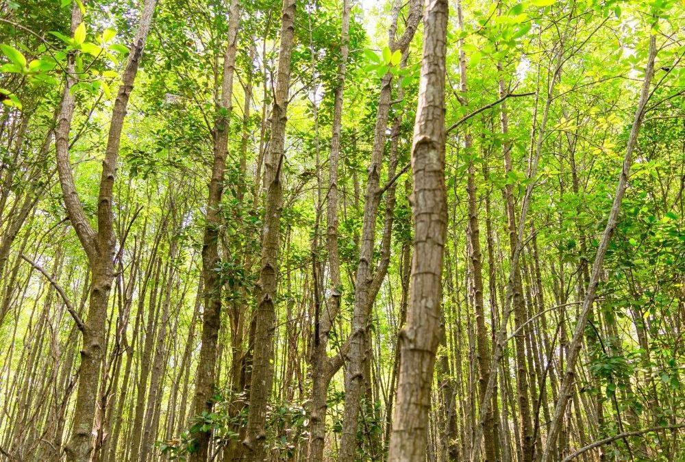 Valuación de plantaciones forestales